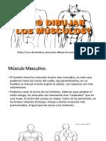Cómo Dibujar Los Músculos