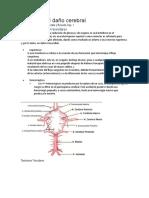 Etiología Del Daño Cerebral