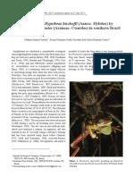 Predation on Hypsiboas Bischoffi (Anura Hylidae) by Phoneutria Nigriventer (Araneae Ctenidae) in Southern Brazil