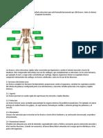 Sistema Oseo Info e Imagen