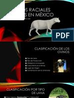 Razas Ovinos en México