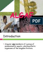 1 Algae