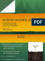 rac3adcesmodificadas1.pdf