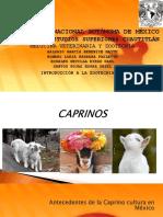 Caprinos Intro