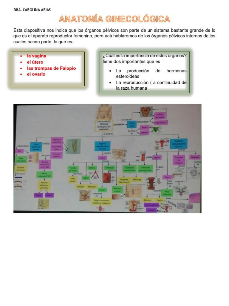 Anatomía Ginecológica Dra Arias