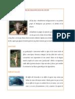 6 Especies Desconocidas de Fauna