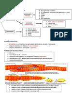 Filo Annelida Resumo