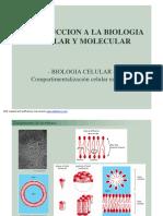 biologia mlecular organelas