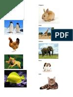 5 Animales Ovíparos