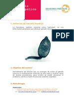 fasciola+hepatica