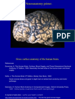 Week 2 - Neuroanatomy