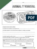 Célula-animal-y-vegetal.pdf