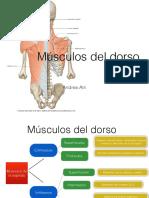 Mu_sculos Del Dorso