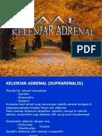 Faal Kelenjar Adrenal