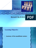 Mn Molars Anatomy