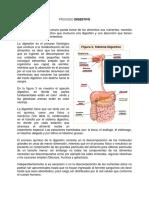 Proceso Digestivo
