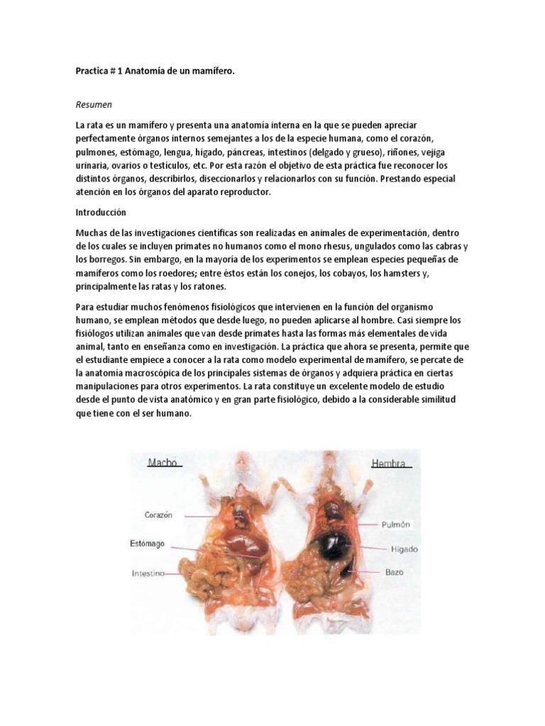 Excelente Anatomía Testículo De Ratón Cresta - Imágenes de Anatomía ...