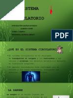 Sistema Circulatorio (2)