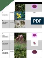 Tablas-Polen- Convencional e Insectos