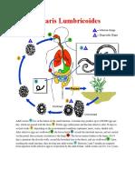 Intestinal Nematodes Life Cycle