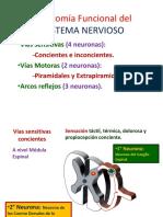 Anatomía Funcional Del SNC