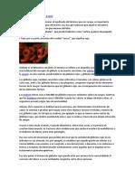 Definición Deglóbulos Rojos