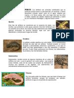 Anfibios Concepto e Imagen