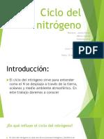Ciclo Del Nitrógeno