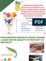 Ppt Mka 1 Biofilter Rumput Laut Pada Bddy Udang Vaname