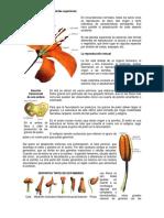 La Reproducción de Las Plantas Superiores