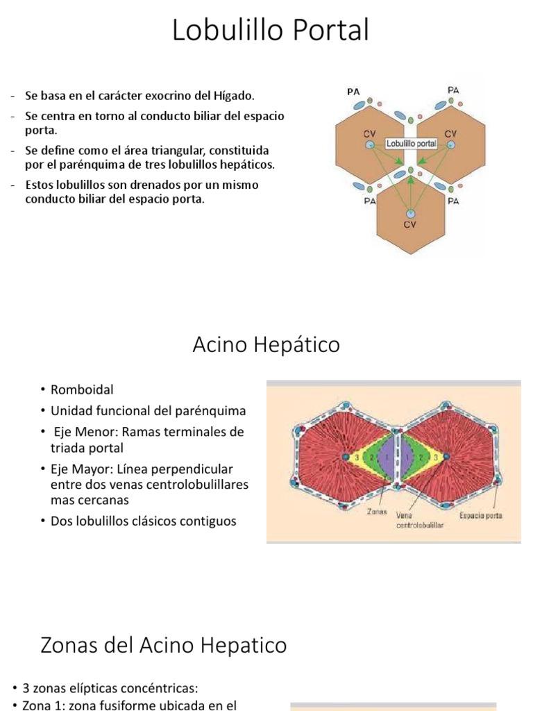 Lobulillo Portal