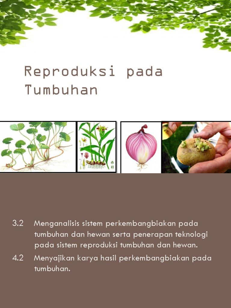 Hidroponik Aeroponik Vertikultur Kultur Jaringan