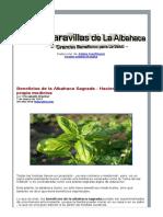 Albahaca , ciencia_industryhealthiermedica