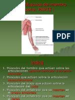 130162118-Fundamentos-Tema-7-Musculos-del-miembro-superior-ppt.ppt