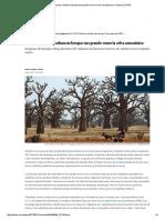 Las Tierras Secas Ocultan Un Bosque Tan Grande Como La Selva Amazónica _ Ciencia _ EL PAÍS