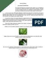 Clases de Plantas