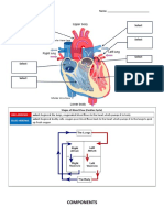 Worksheet - Circulatory System