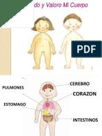 Organos Del Cuerpo Humano