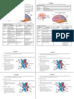 Brain CN (Autosaved)