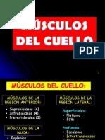 Miología Del Cuello