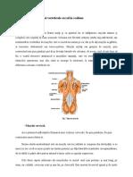 2 2 Muscularura Coloanei