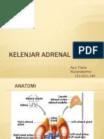 Ppt. Kelenjar Adrenal