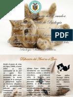 Diaspositivas Gatos