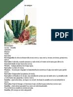 Guion Teatral El Cactus y Sus Amigos
