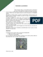 PLAGAS POLIFITOFAGAS - ROEDORES