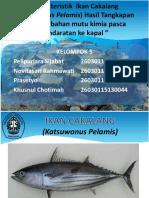 Karakteristik Ikan Cakalang (Katsuwonus Pelamis)