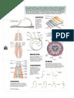 Nematodos lamina.pdf