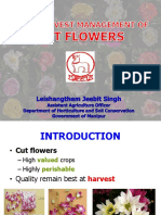 Post Harvest Management of Cut Flower Jeebit