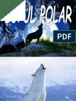Lupul Polar
