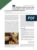 Burgos Gallardo 2013 Phyllopezus pollicaris